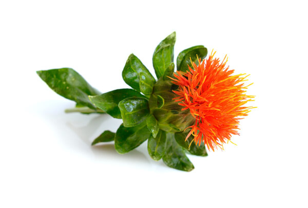safflower plant private label skin care