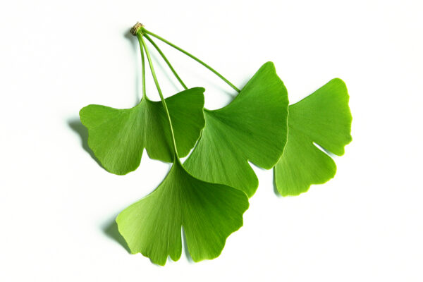 ginkgo biloba private label skin care