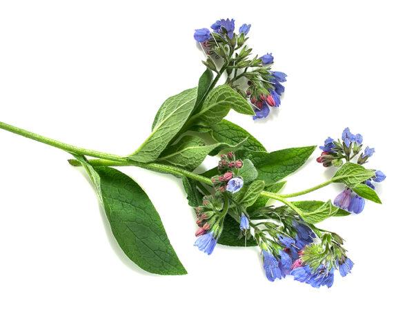 allantoin comfrey flowers private label skin care
