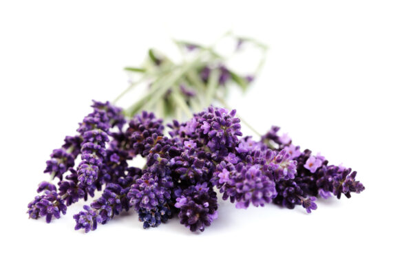 lavender flowers private label skin care