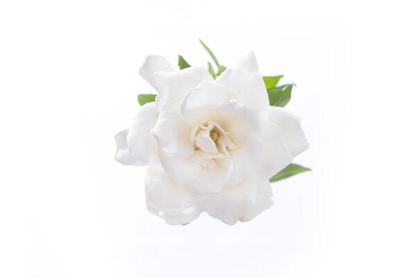 white gardenia private label skin care